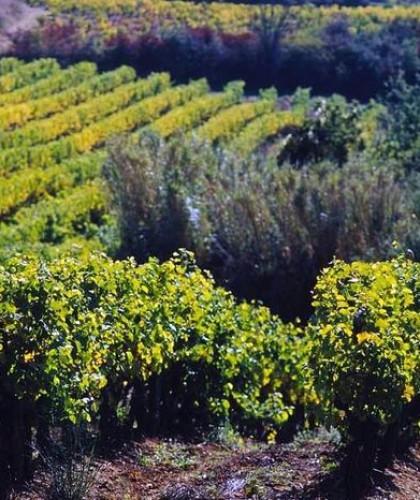 Terroir vignes 2