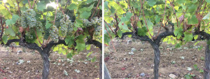 cheninbeforeafter-copie